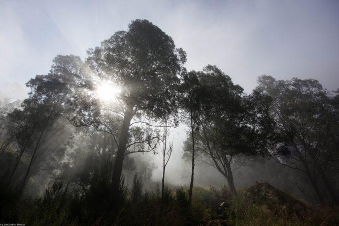 幻想的な森の画像