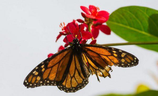 蝶々の画像