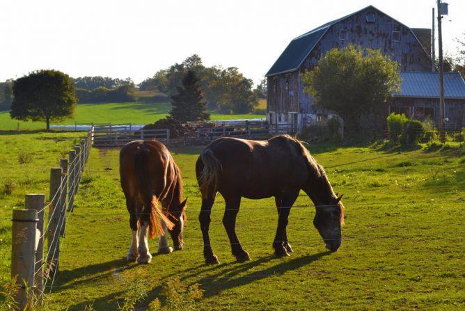 馬のいる画像