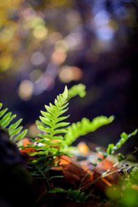 草のある画像