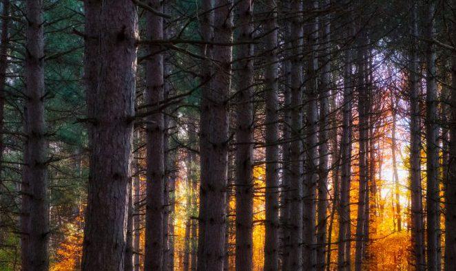 木々のある画像