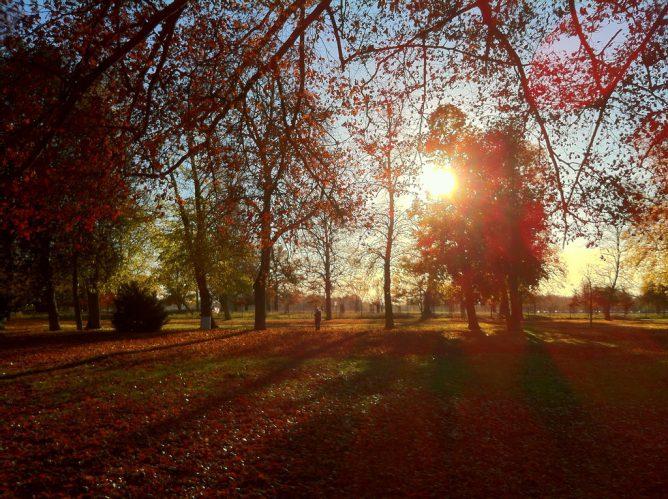 太陽がさす、森の画像