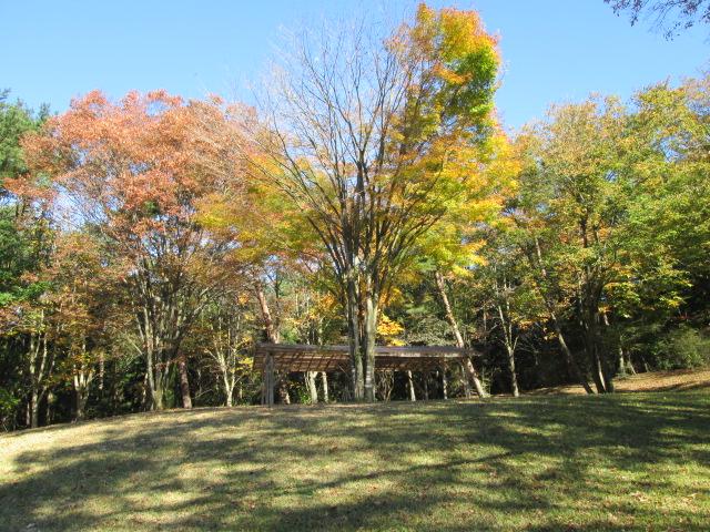 赤城自然公園の森