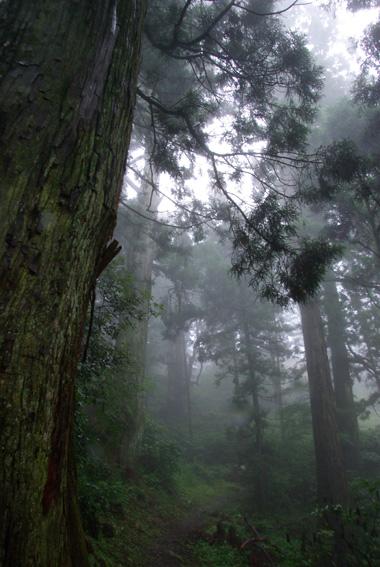 霧のある森の画像
