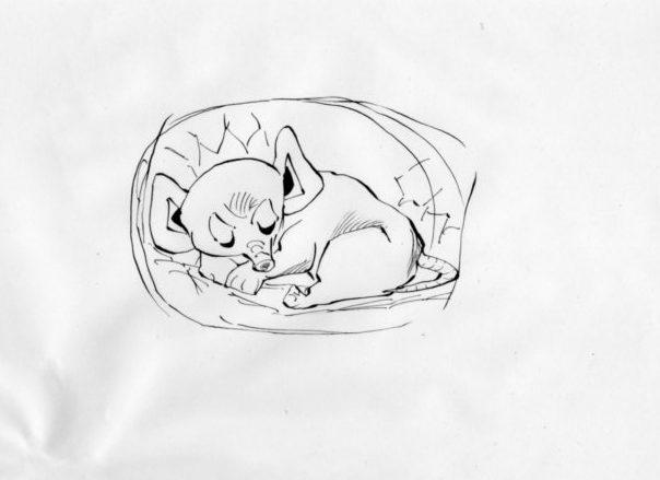 冬眠している生物のイラスト