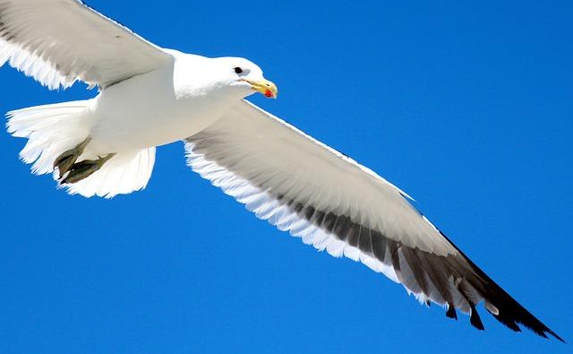 空を飛ぶ鳩の画像