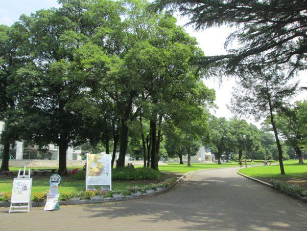 群馬県立美術館の森の画像