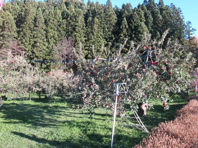 群馬県沼田市佐山のりんご園の画像