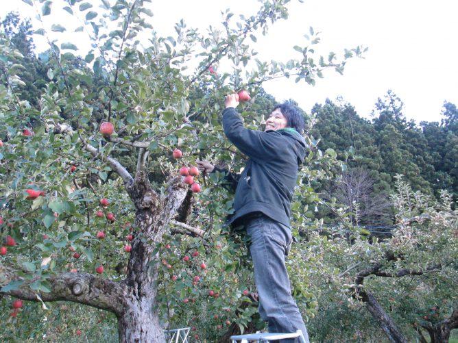 りんご狩りをしている粕川の画像
