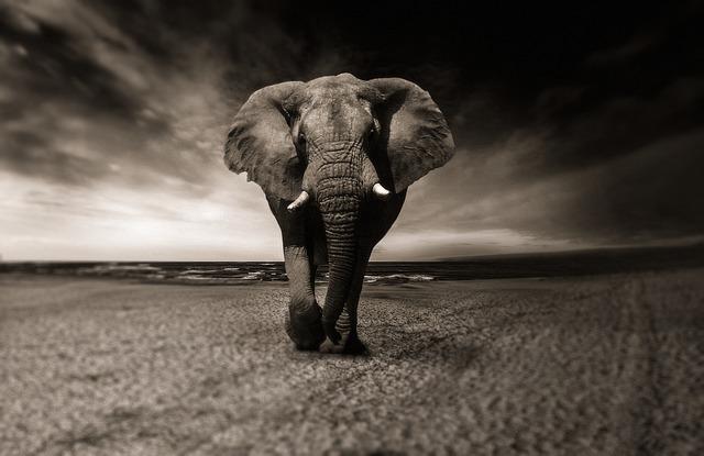 象が歩いている画像