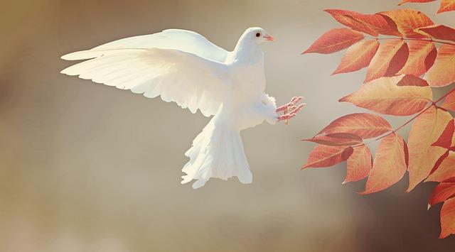 白いハトの画像