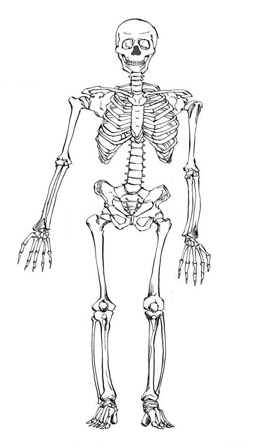 漫画 人体 骸骨 描き方