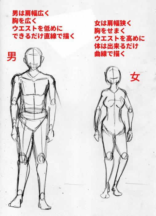 漫画の人体の描き方 男女の違い