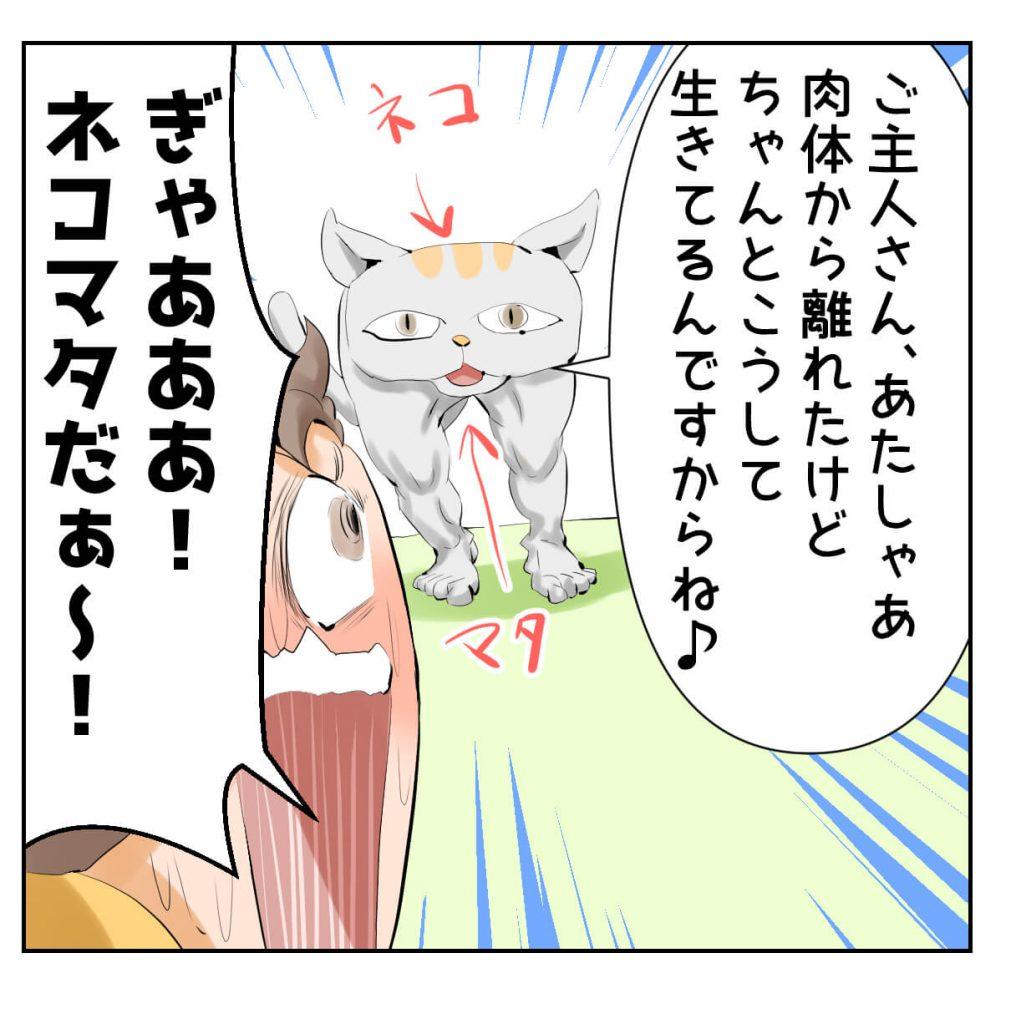 猫,死んだ,漫画